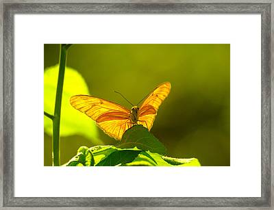 Then A Butterfly Framed Print