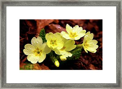 Then It Was Spring 2 Framed Print