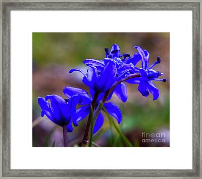 Then It Was Spring 3 Framed Print