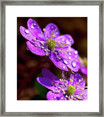 Then It Was Spring Framed Print