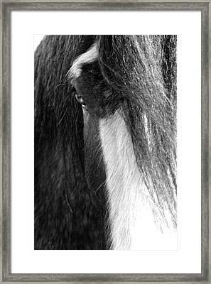 Theoden In Bw Framed Print