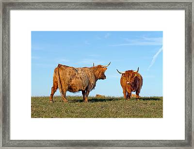 There Can Be Only One Highland Cow Framed Print