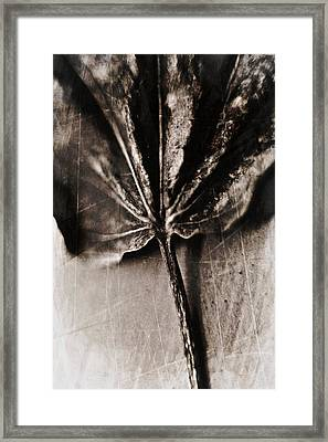 Framed Print featuring the photograph There Is A Season by Aaron Berg