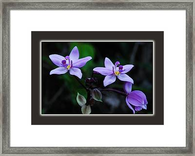 There Is Always A Bright Spot Framed Print by Michael Peychich