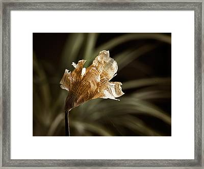 There Is Beauty In Death Framed Print by Carol Hyman