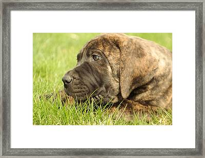 There Is Nothing Better Than A Bone And Some Warm Grass Framed Print