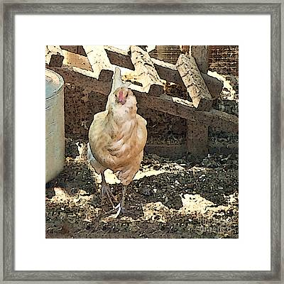There's  A Chicken In The Hen House Framed Print by Artist and Photographer Laura Wrede