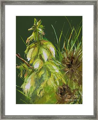 Theres A Yucca In My Yard Framed Print by Frances Marino