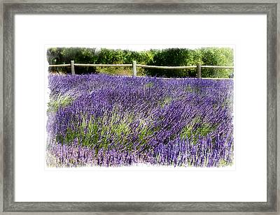 Framed Print featuring the photograph There's Flowers For You Too by Ryan Weddle