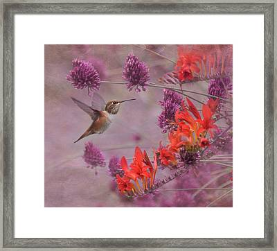 There's Purple In My Crocosmia Framed Print