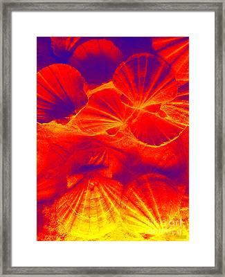Thermal Shells Framed Print by Hanza Turgul