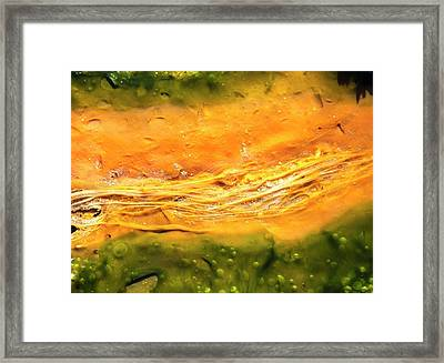 Thermophilic Bacteria And Algae Colours Framed Print by Peter J. Raymond
