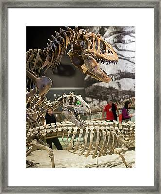 Theropod Dinosaur Fossils Display Framed Print by Jim West