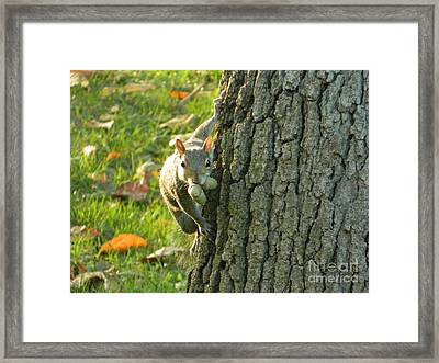 These Nuts Are All Mine Framed Print