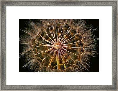 These Pods Light Up Just Dandy. Framed Print