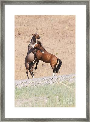 Framed Print featuring the photograph They Ain't Dancin' by Vinnie Oakes