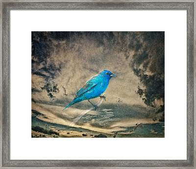 They Call Me Blue Framed Print