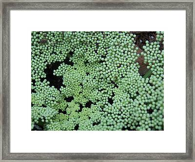 Framed Print featuring the photograph They Say by John Glass