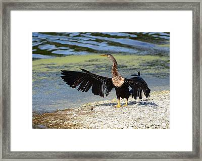 They Went That-tah Way Framed Print by Kathy Baccari