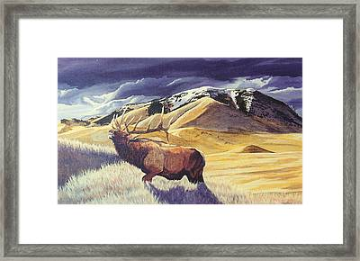 Theyre Bugling On West Butte Framed Print