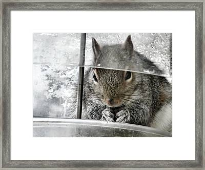 Thief In The Birdfeeder Framed Print