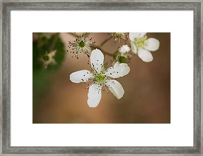 Thimbleweed Framed Print by Kirkodd Photography Of New England
