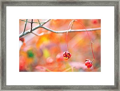 Thin Tree Branch With Bud Framed Print by Panoramic Images