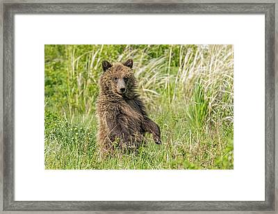 Things Are Looking Up Framed Print by Sandy Sisti