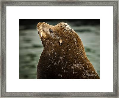 Things Are Looking Up-sealion Framed Print by David Millenheft