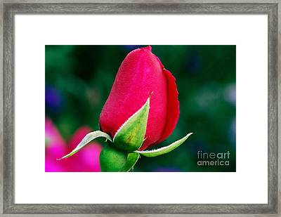 Things To Come Framed Print by Wendy Wilton