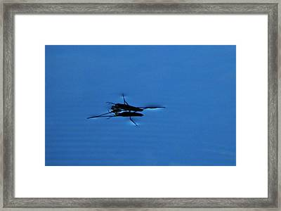 Think Light Framed Print by Andrew  Stoffel