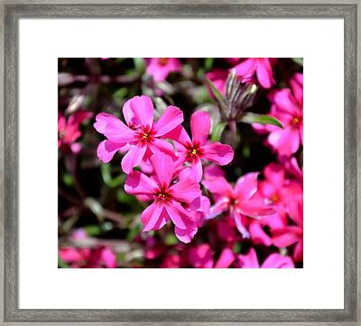 Think Pink Framed Print by Deena Stoddard