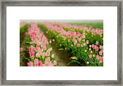 Think Pink Framed Print by Nick  Boren