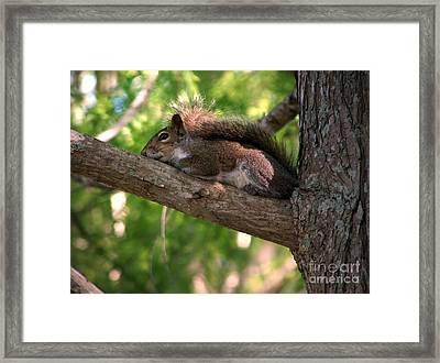 Thinking Squirrel Framed Print by Sabrina Wheeler