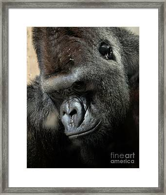 Thinking Framed Print by Steven Reed