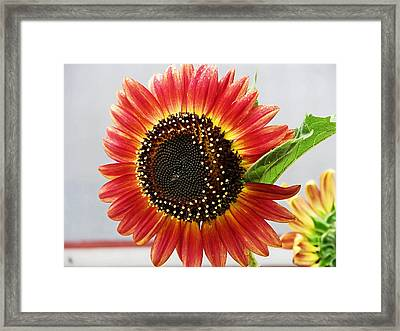 Thinking Summer Framed Print by Victoria Sheldon