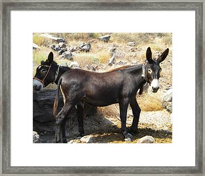 Thirasia  Donkeys Santorini Greece Framed Print