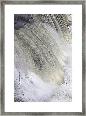 Thirst Framed Print by Charlotte Daniels