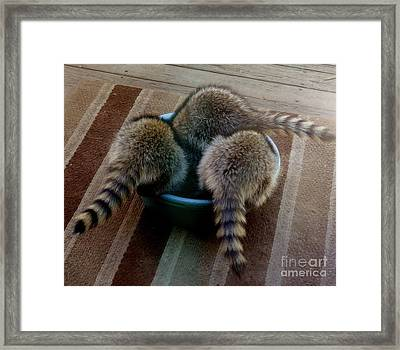 Thirsty Babies Framed Print by Jacquelyn Roberts