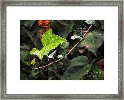 Framed Print featuring the photograph Thirsty by Ellen Cotton
