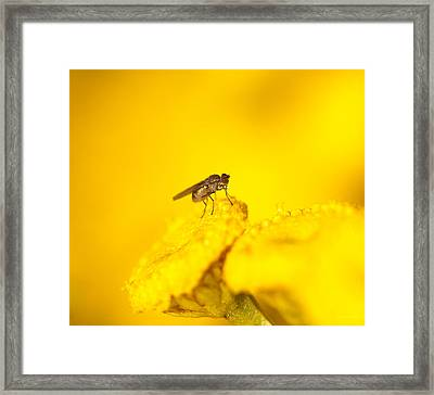 Thirsty Fly Framed Print by Sarah Crites