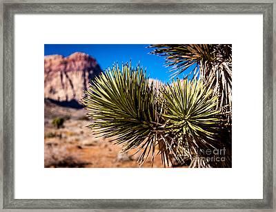 Thirsty In The Desert 1 Framed Print