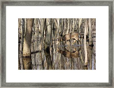 Framed Print featuring the photograph Thirsty Pause by Lorna Rogers Photography