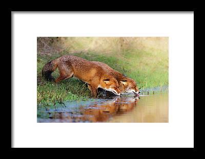 Fox River Framed Prints