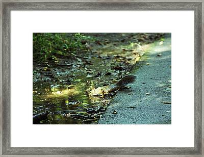 Framed Print featuring the photograph Thirsty Squirrel by Lorna Rogers Photography