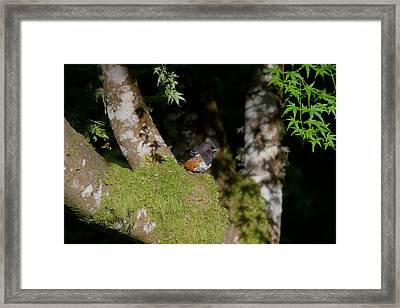This Is A Soft Spot To Sit Framed Print by Kym Backland