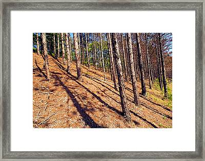 This Is A Steep Hill For Old Legs Framed Print
