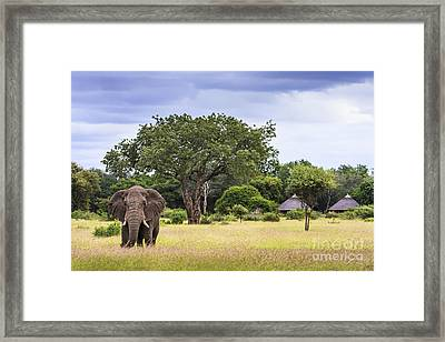 This Is Africa Framed Print