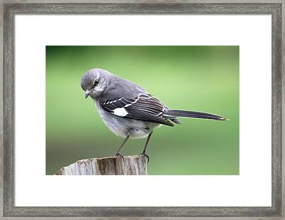 This Is My Backyard Framed Print by Marion Johnson