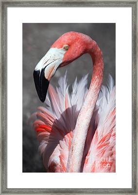 This Is My Good Side Framed Print by Sheryl Unwin